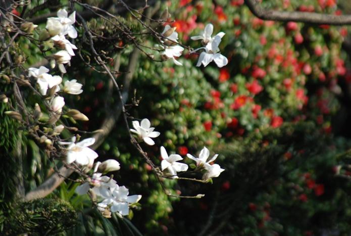 境内春景色 花